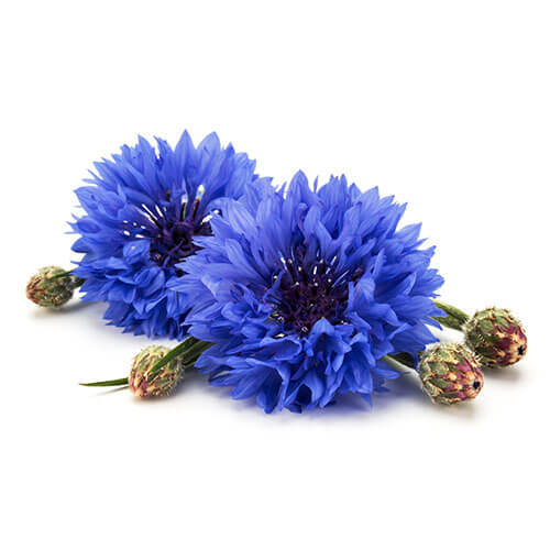 Cornflower or Sultan Seeds