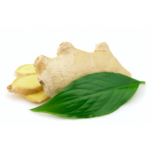 Ginger Leaf