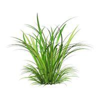 Meadow Greens