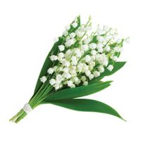 Lily of the Valley Molecule