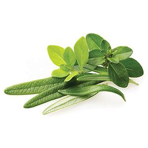 Green Sap