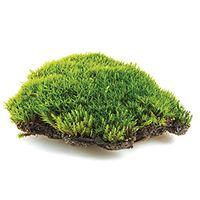 Wet Jungle Moss