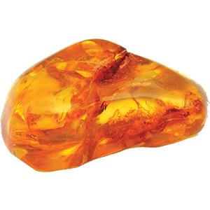 Dry Amber