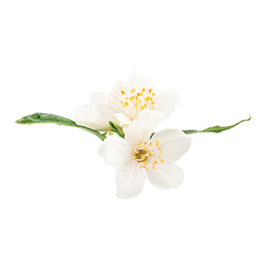 Tea Blossom